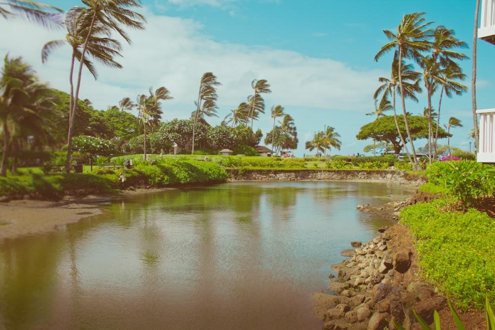 kauai-4074
